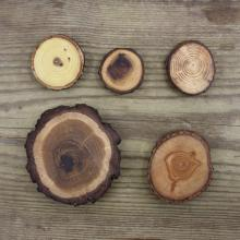 5 different kinds of tree branch magnets